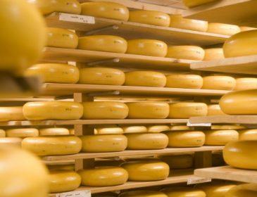 Дорожче ще не було: ціни на сир досягли свого піку