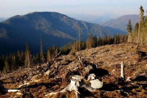 Вирубка лісів в Україні: стала відома жахлива статистика