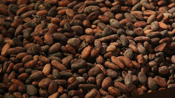 У світі різко обвалилися ціни на какао