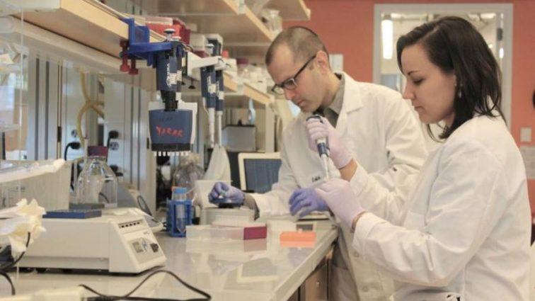 Вчені знайшли ідеальних донорів для людей
