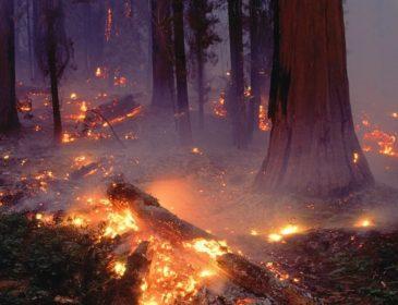 """Гройсман цинічно """"відфутболив"""" попередження про лісову катастрофу"""