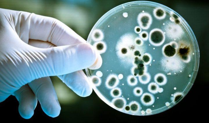 У Ватикані відбудеться семінар про клітинну біологію