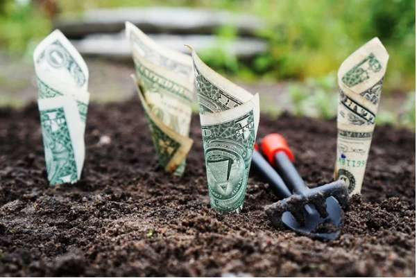 Доларовий дощ у Вінниці: вирішено долю засіяної грошима клумби