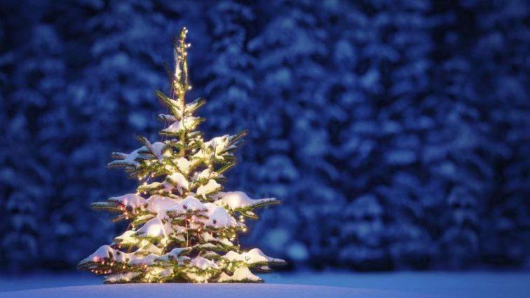 Залиште дерево в лісі: 10 варіантів оригінальних новорічних ялинок