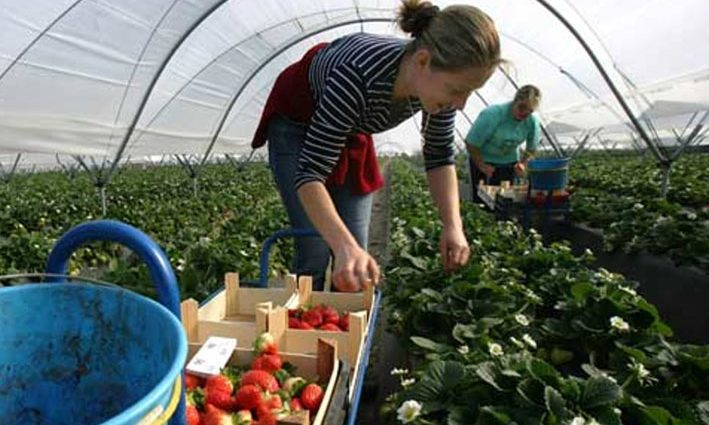 """""""Обсяг переказів постійно збільшується"""": дізнайтесь скільки грошей заробітчани перевели в Україну"""