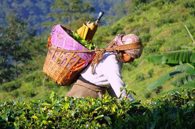 Як заробити 47 мільйонів на чаї: новітні технології шахрайства