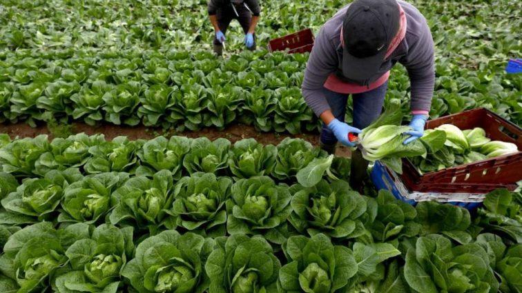 Стало відомо, за яких умов трудові мігранти можуть отримати субсидії