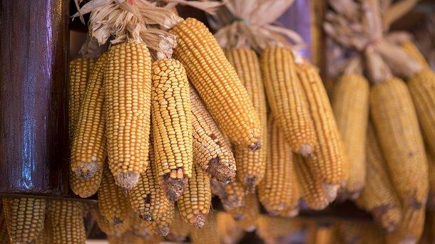Скільки Україна заробляє на експорті їжі